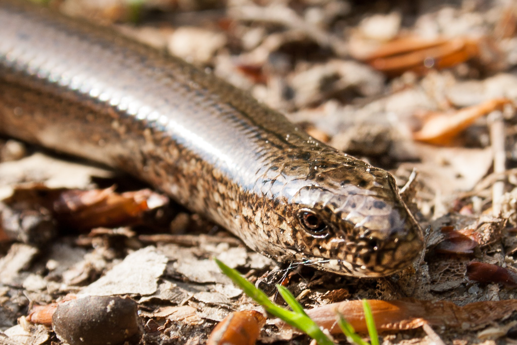 how to catch a slow worm